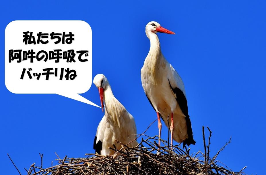 阿吽の呼吸で仲の良い鳥