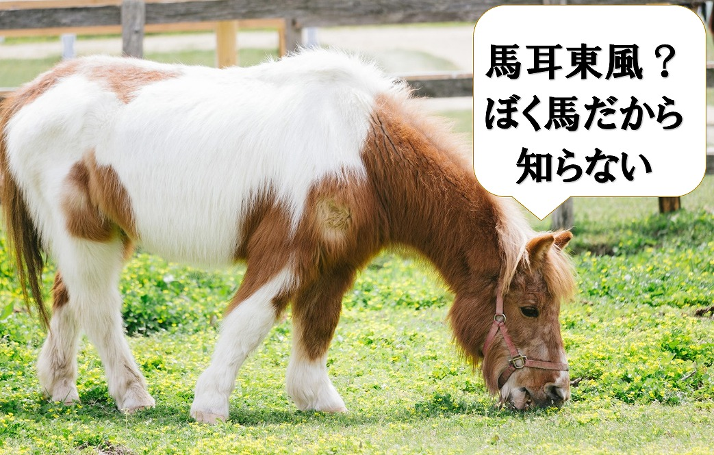 馬耳東風を聞かれて意味を知らない馬