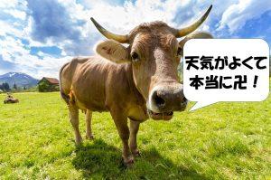 卍を使う牛