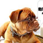 勉強しろと言っている犬