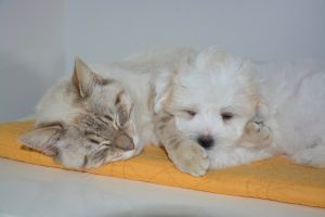 ネコと子犬の昼寝