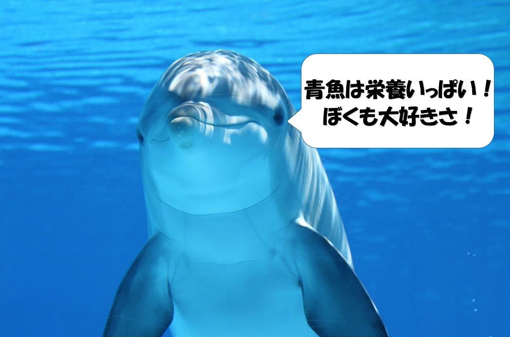 青魚が好きなイルカ