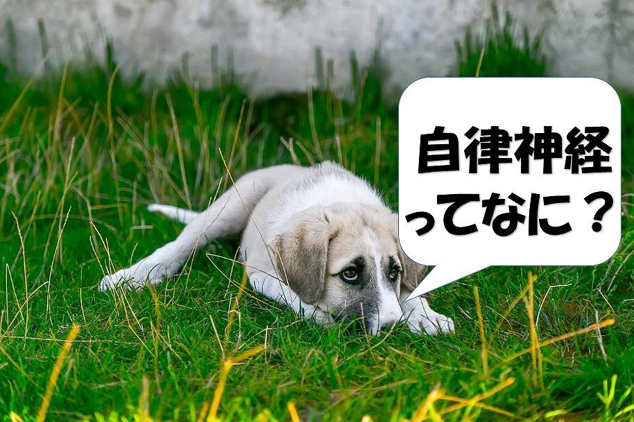 自律神経ってなにと悩んでいる犬