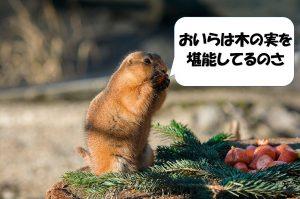 木の実を堪能している動物