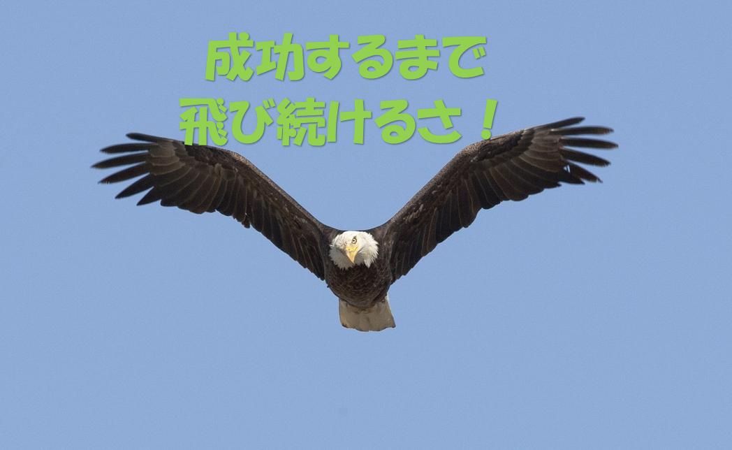 成功するまで飛び続けるタカ