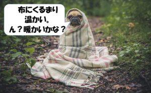 温かいか暖かいか悩む犬