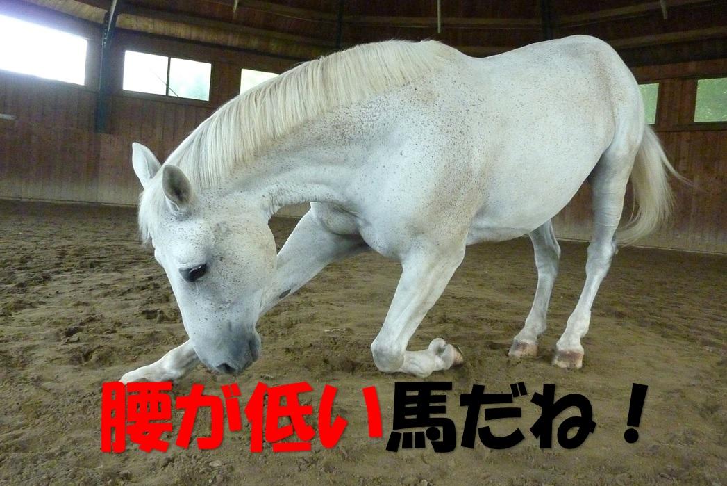 腰が低い馬
