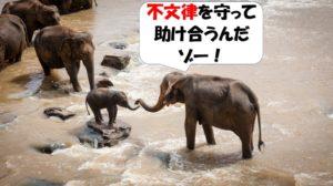 不文律を守り助け合う象