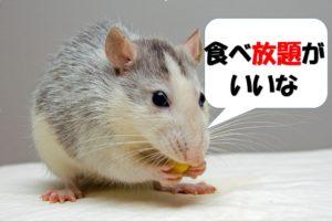 食べ放題が好きなネズミ