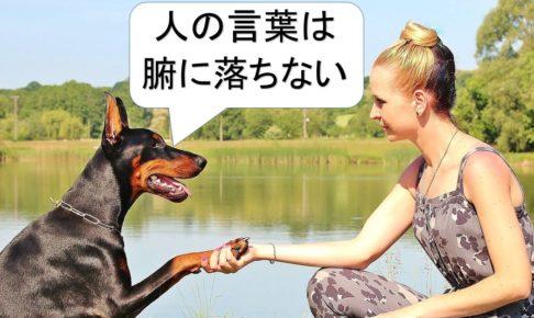 人の言葉は腑に落ちないと言っている犬