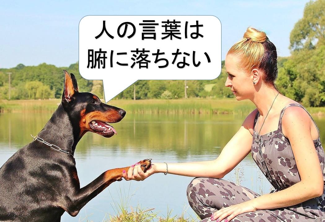人の言葉は腑に落ちない犬